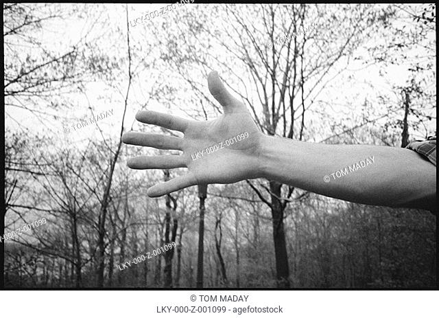 Cropped view of man's hand in wooded setting