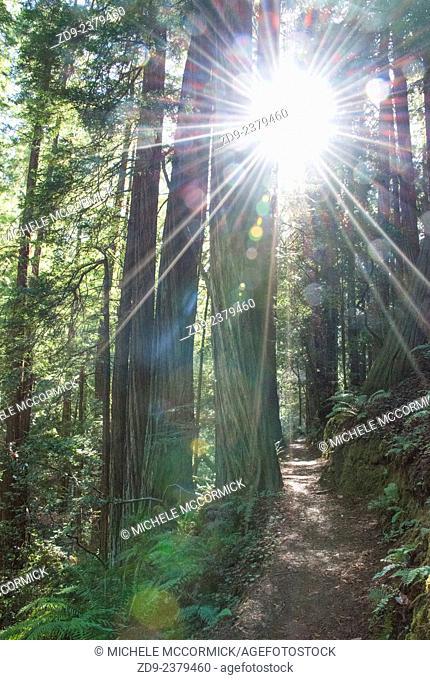 Northern California's Muir Woods offers wonderful woodland walks among beautiful sequoia trees