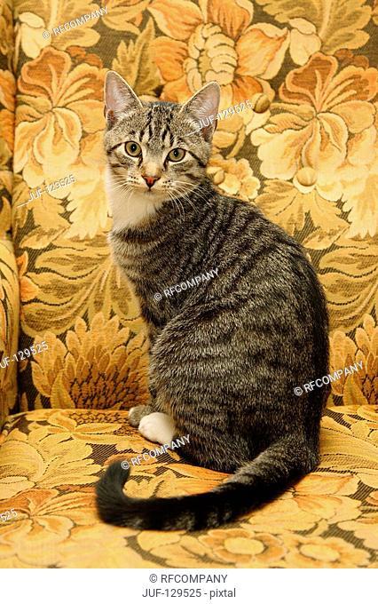 domestic cat - sitting