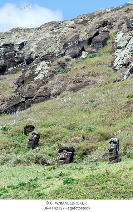 Moais on the flanks of Rano Raraku volcano, Unesco World Heritage, Rapa Nui National Park, Easter Island, Chile