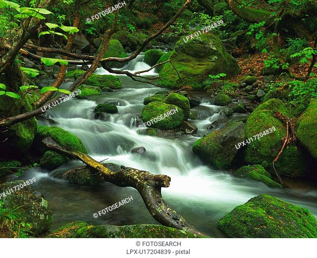 a Mountain Stream, Surrounded With Rocks That Are Covered With Moss, High Angle View, Long Exposure, Akita Prefecture, Japan