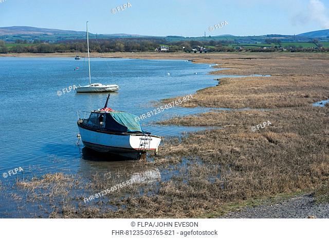 Boats on river beside wetland habitat, Glasson Dock, River Lune, Lancaster, Lancashire, England, march