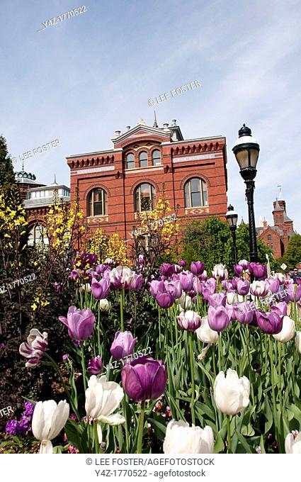 USA, Washington DC, tulips at the Smithsonian building on the National Mall