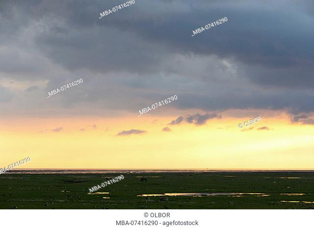 Germany, Schleswig-Holstein, Hallig Hooge, lighting on the horizon