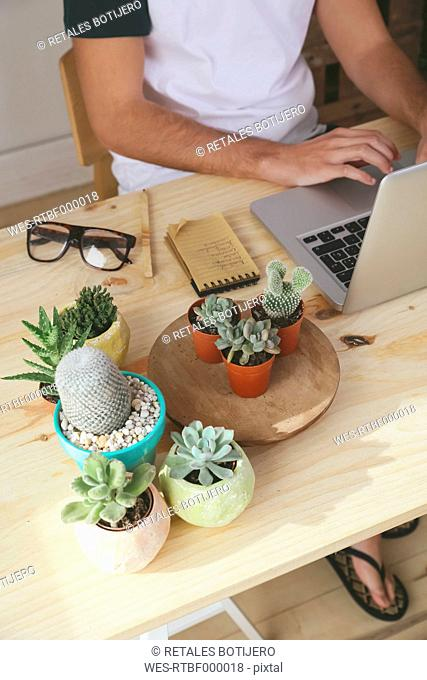 Young man using laptop on desk with potted cactii
