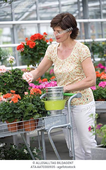 Woman choosing geranium in a greenhouse