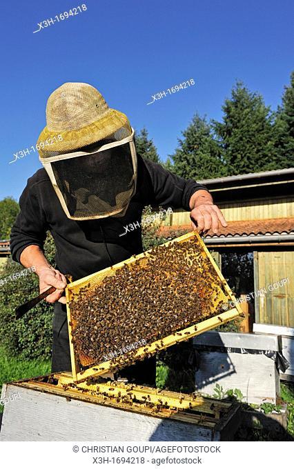 beekeeper, La Miellerie, Beurrieres, Livradois-Forez Regional Nature Park, Puy-de Dome department, Auvergne region, France, Europe