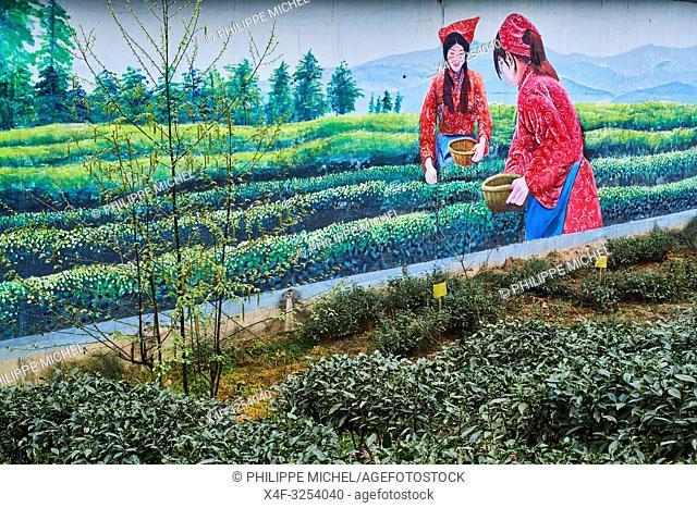 China, Sichuan province, Mingshan, statue of Wu Lizhen, tea garden