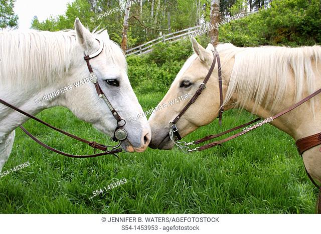 Two horses together