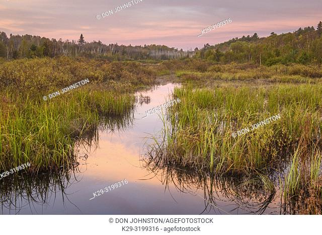 Beaver pond at dawn in early autumn, Greater Sudbury, Ontario, Canada