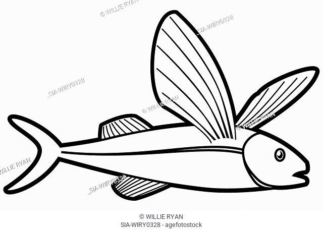 Flying fish on white background