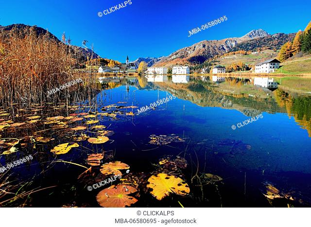 Lily pads yellowed by autumn floating in Lake Tarasp, Engadine, Canton of Graubunden, Switzerland Europe