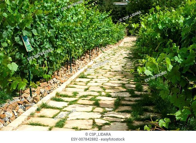 Road across vineyard in Prague
