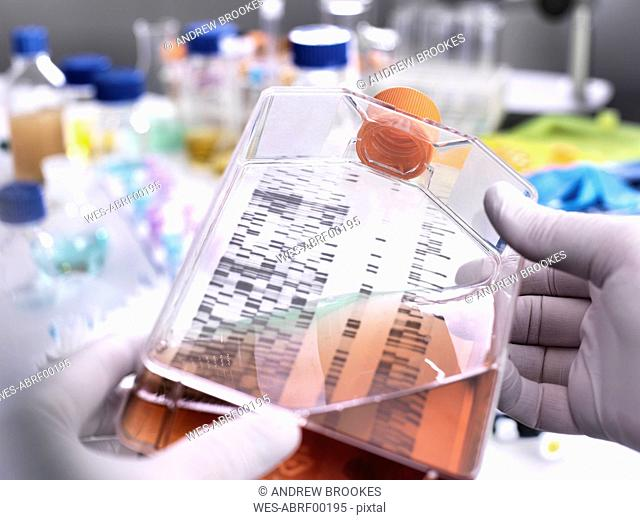 Stem cell research, scientist holding a culture jar with a DNA gel in the background