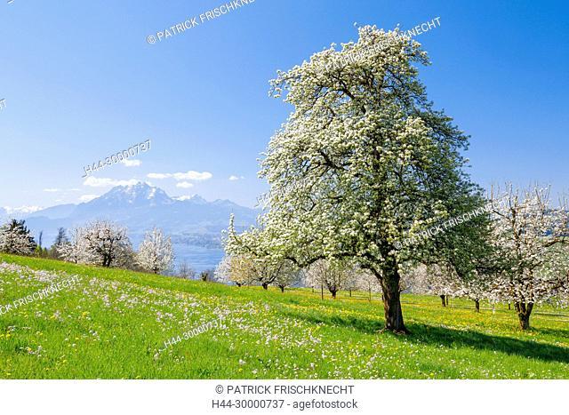 Aussicht auf Pilatus und Vielwaldstättersee, Schweiz