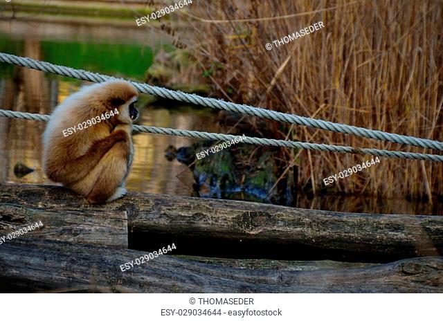 dear small monkey sitting on a bridge at the zoo