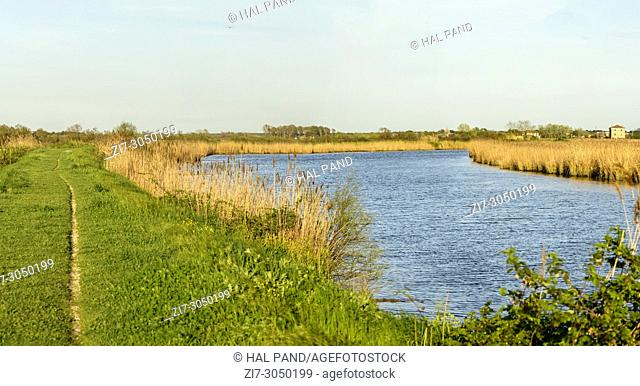 panoramic landscape of lagoon gren dams and reeds, shot in bright spring sun light at nature oasis, Cannavie, Volano, Ferrara, Italy
