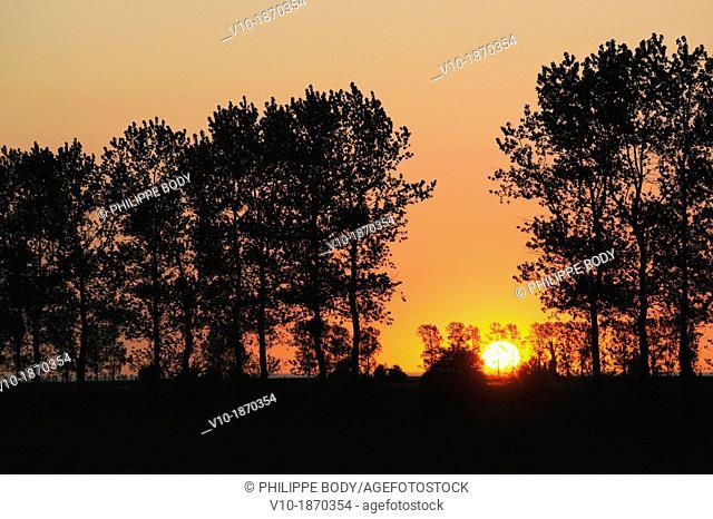 France, Normandy, Manche, sunrise behind poplar trees