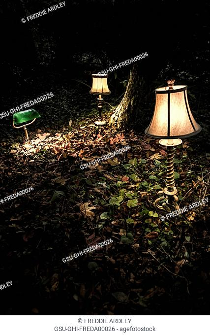 Illuminated Lamps on Ground in Woods at Night, Close Up