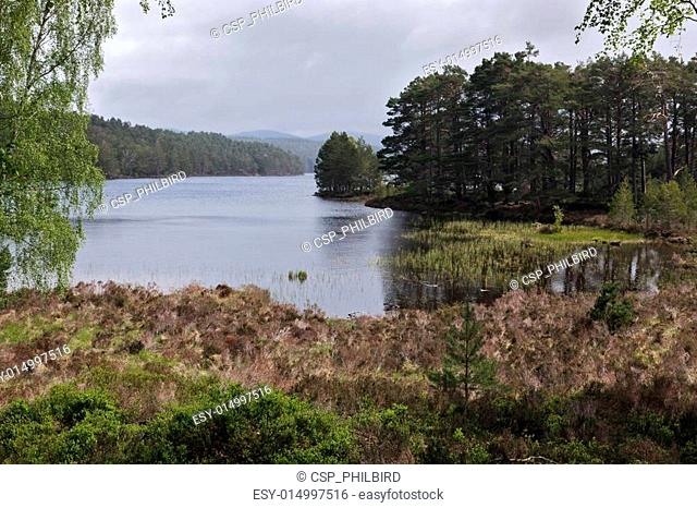 Scenic view of Loch Eilein