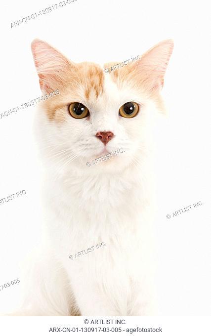 A cat's portrait