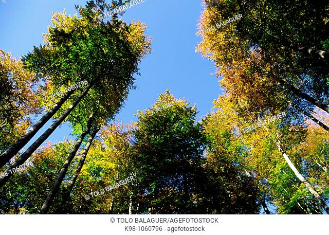 Irati forest, Navarre, Spain