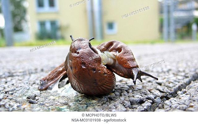 Nsa Slugs