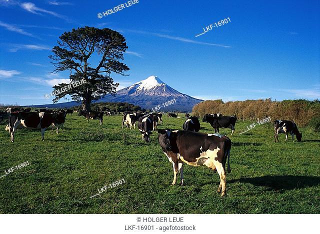 Mount Taranaki, near New Plymouth, Taranaki, North Island, New Zealand