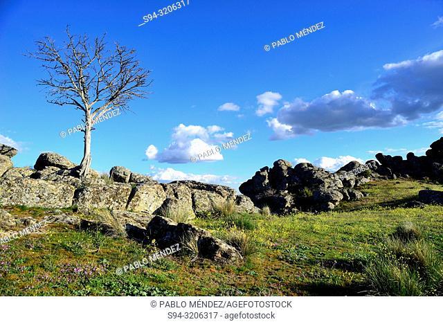 Landscape in the Cerro San Pedro, between Guadalix de la Sierra and Colmenar Viejo, Madrid, Spain