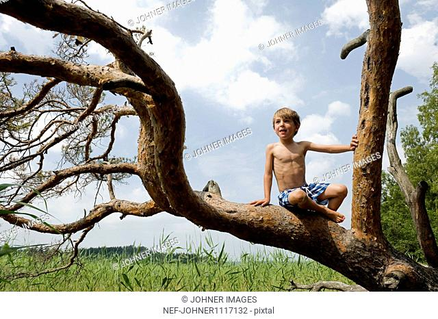Shirtless boy sitting on tree