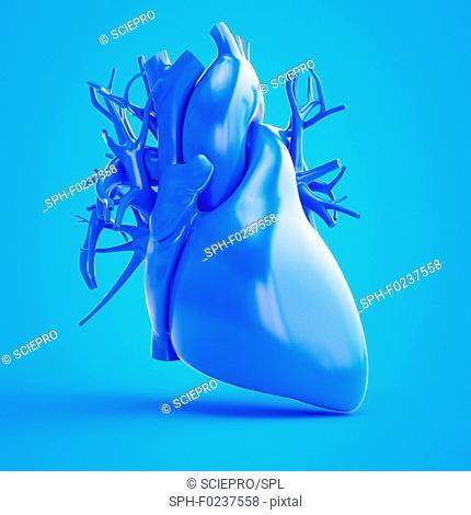 Illustration of a blue heart