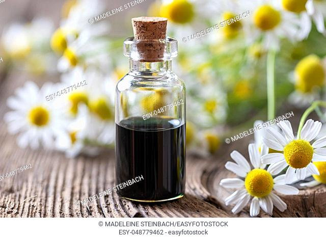 A bottle of dark blue German chamomile essential oil and fresh flowers