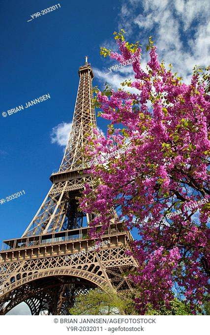 Pink blossoming tree below the Eiffel Tower, Paris France