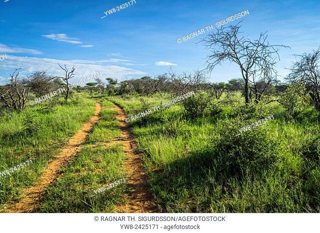 Dirt road with trees, Okonjima, Namibia, Africa