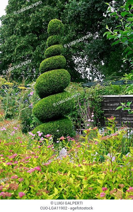 Thuja sp., arte topiaria, topiary