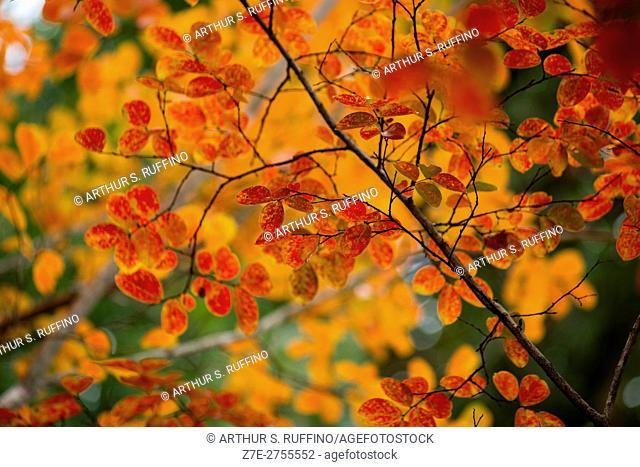 Autumn fantasy. The colors of fall