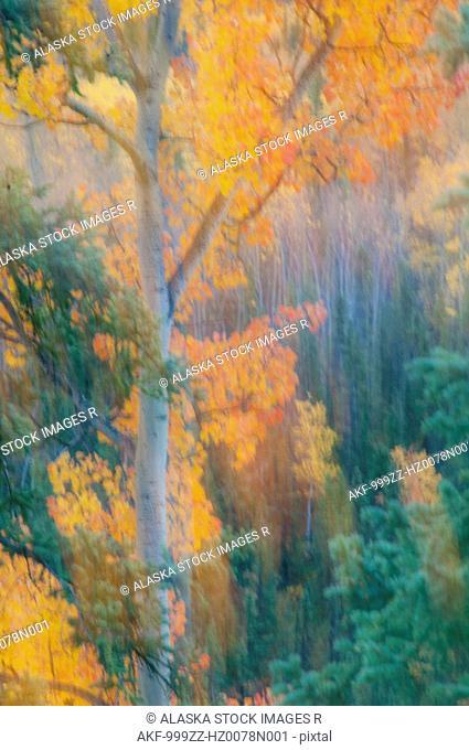 Soft Fall foliage colors in Denali National Park & Preserve, Interior Alaska, Fall