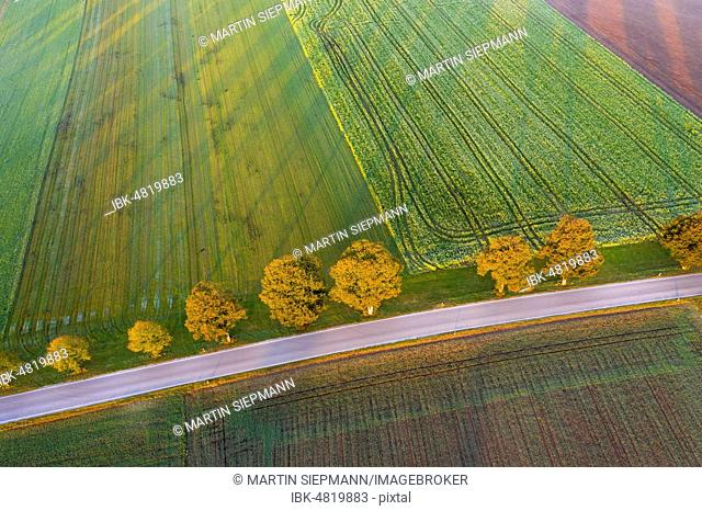 Country road with row of trees at sunrise, near Dietramszell, drone view, Upper Bavaria, Bavaria, Germany