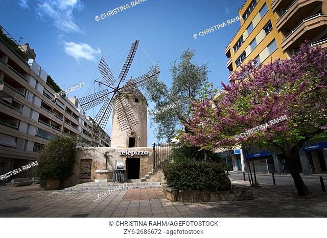 Windmill and blossoming trees in the area Quattro Molinos in Palma de Mallorca, Balearic islands, Spain