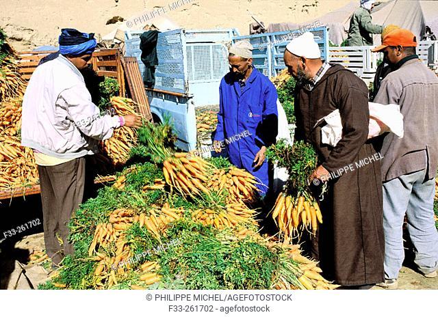 Sunday souk. Taroudant. Morocco