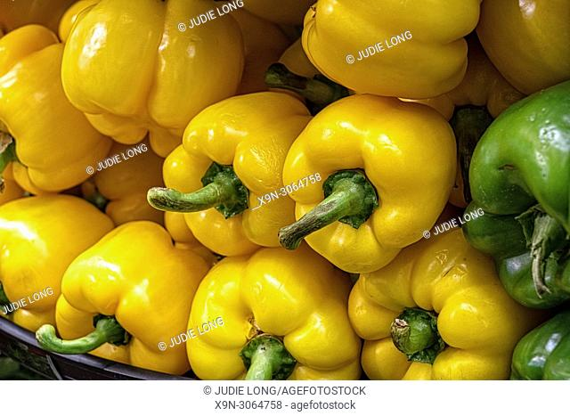 Yellow Peppers, Close Up. Two Peppers Highlighted Amongst Many. Seen on Display and For Sale in a New York City, Manhattan, Food Market