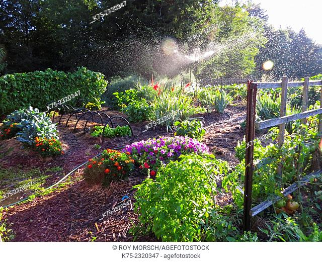 Organic vegetable and flower garden with sprinkler