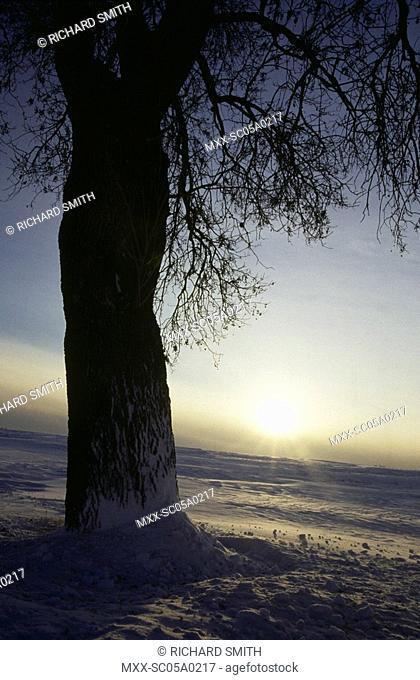 Sunset in Winter, Ottawa, On
