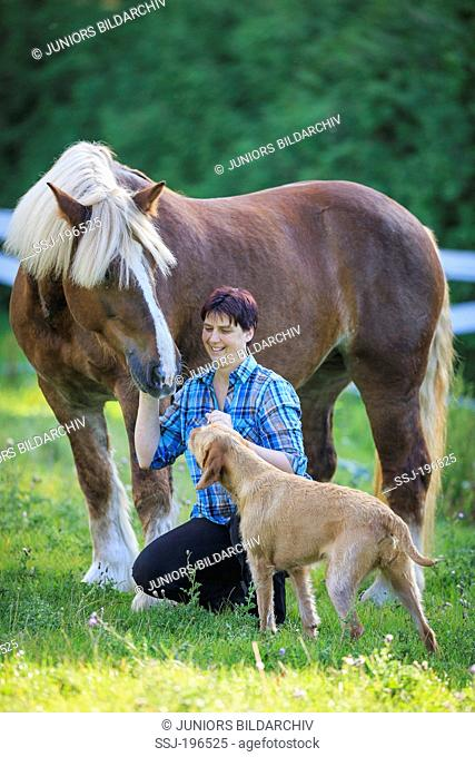 Schleswig Coldblood. Mare, woman and dog smooching on a pasture. Germany