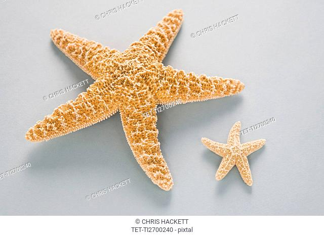 Two contrasting starfish