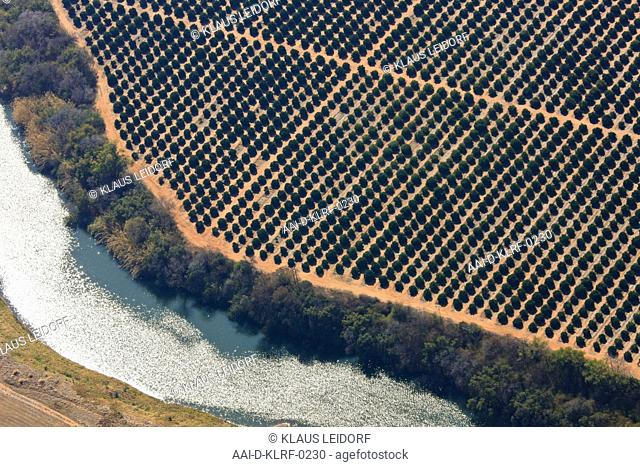 Aerial photograph of fruit plantation next to the Crocodile river near Brits, North West Province, South Africa