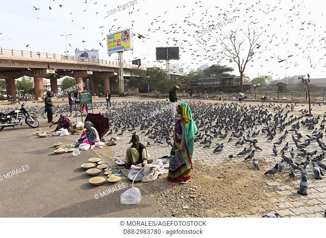 Asia, India, Rajasthan, In Jaipur, members of the Bishnoi ethnic group protecting animals, feed the pigeons of the city