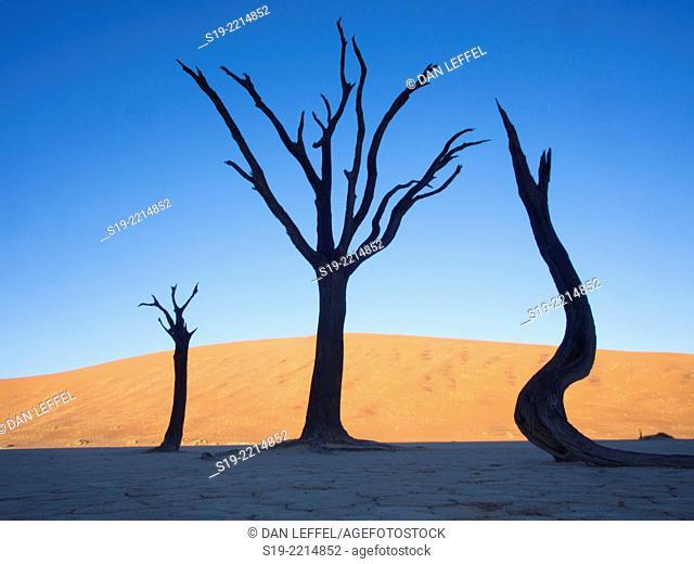 Namibia, Sossusvlei Dunes, Dead trees in desert