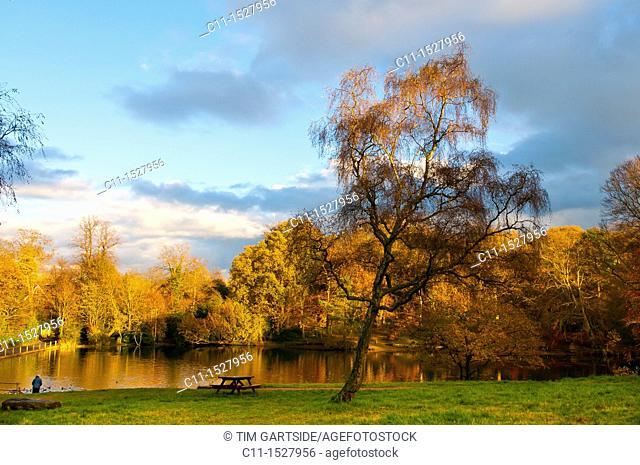 autum colours at keston pond,keston,kent,england,uk,europe