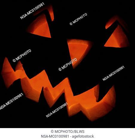 Cucurbita pepo, marrow, field pumpkin